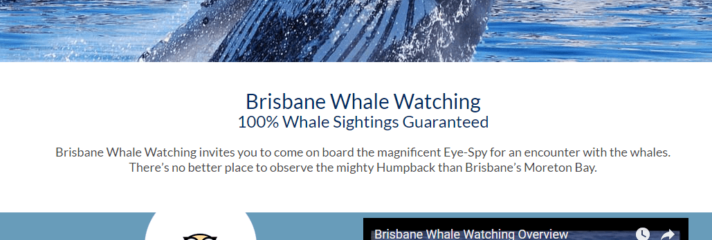 Brisbane Whale Watching guarantee