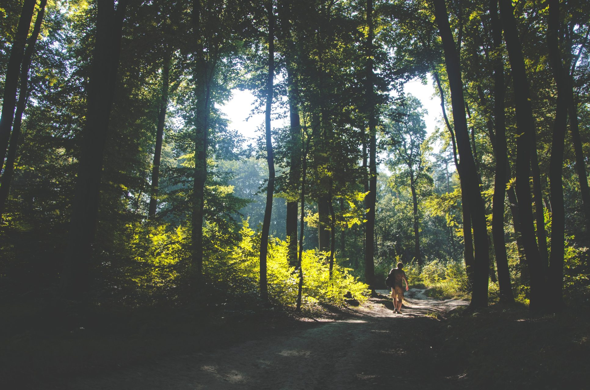 Person Backpacking Through a Forest