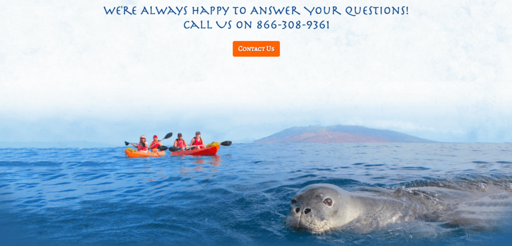 Contact Us image of kayakers out on the sea with a seal in the foreground and a mountain in the background