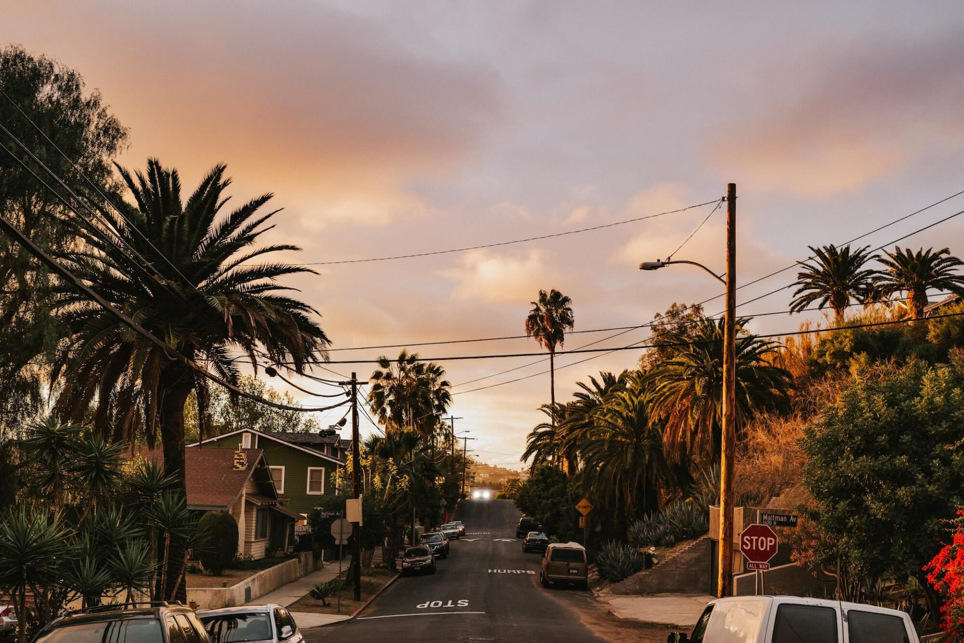 Palm trees lining residential road at sunset