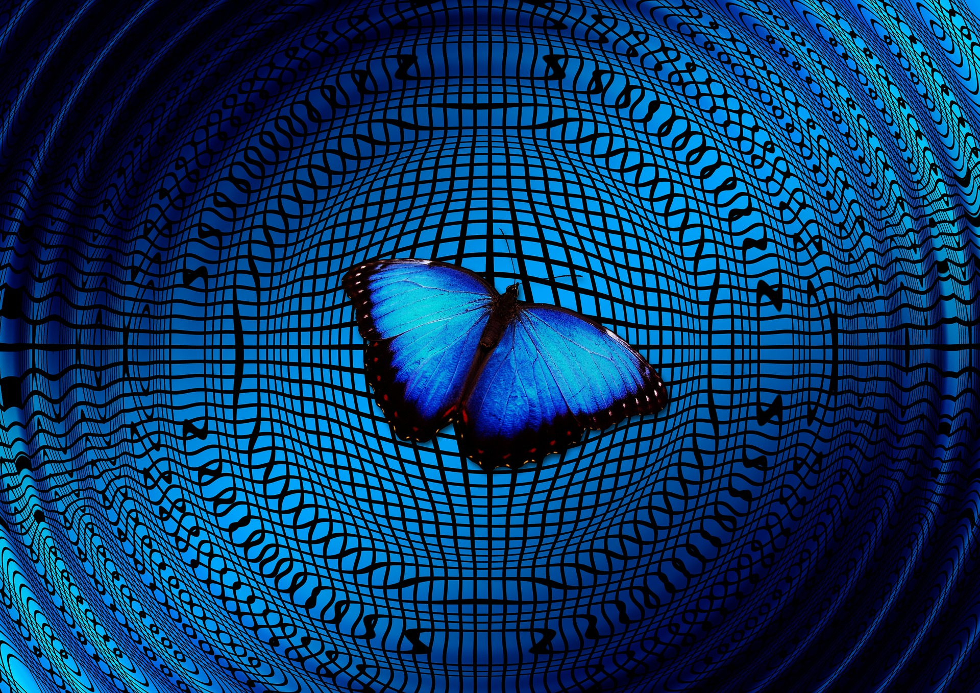 Blue butterfly on a blue textured background