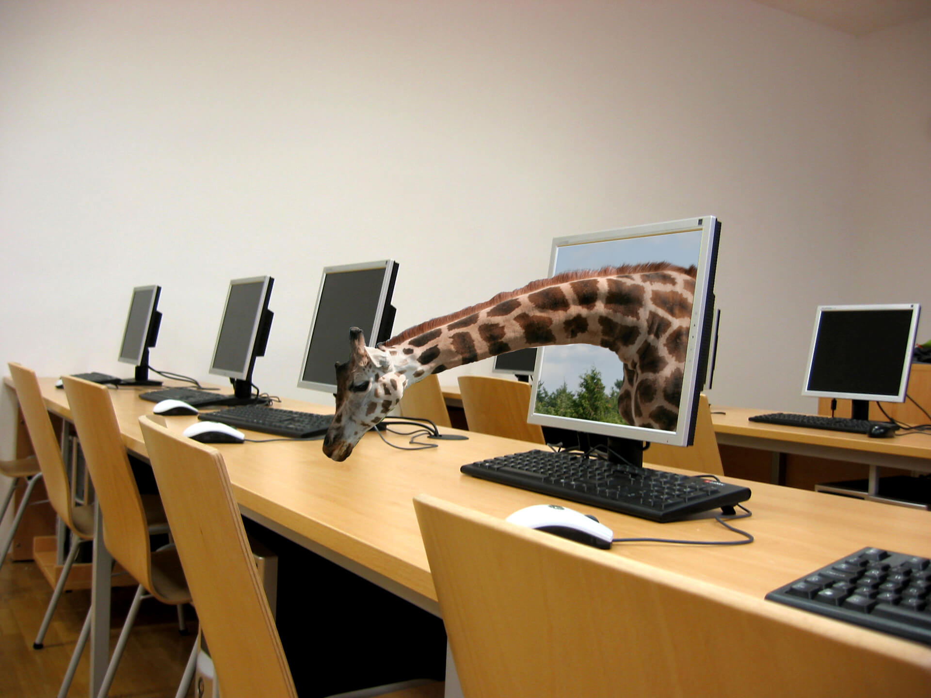 A computer lab with a giraffe coming out of one of the screens
