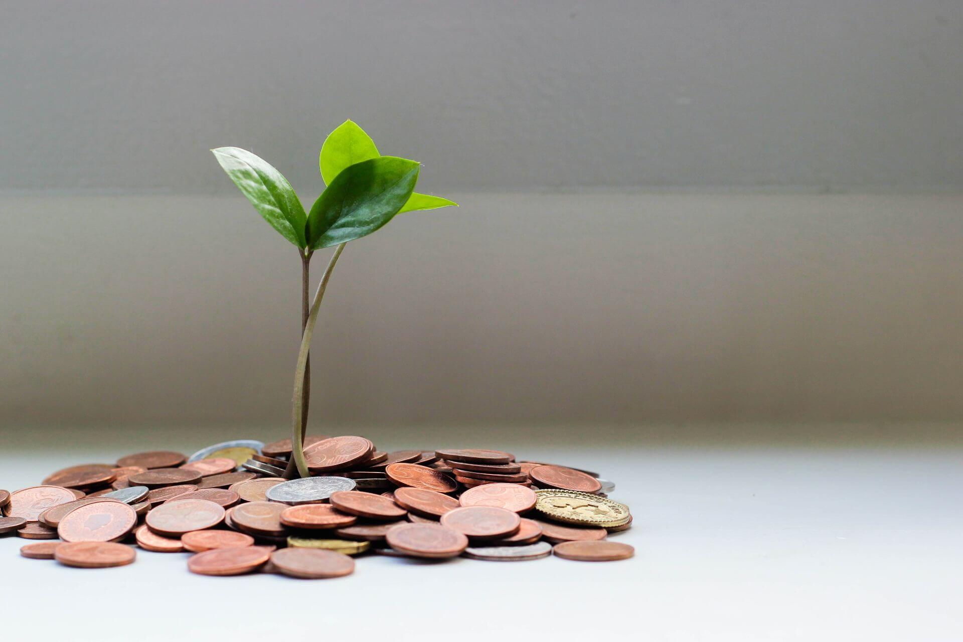 Small green plant growing out of a pile of coins in from of a white background