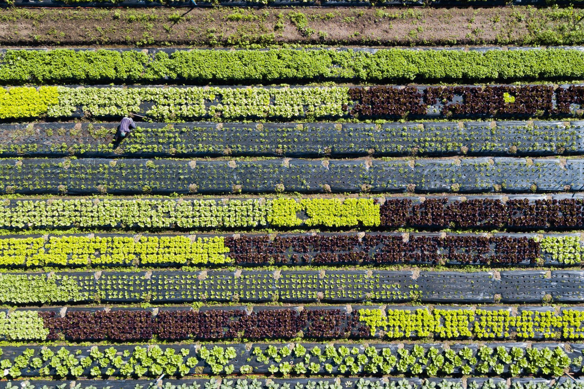 verhead view of a man tending to his vegetable farm