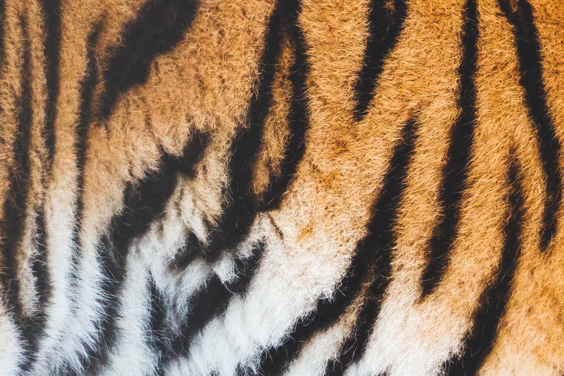 Tiger fur pattern