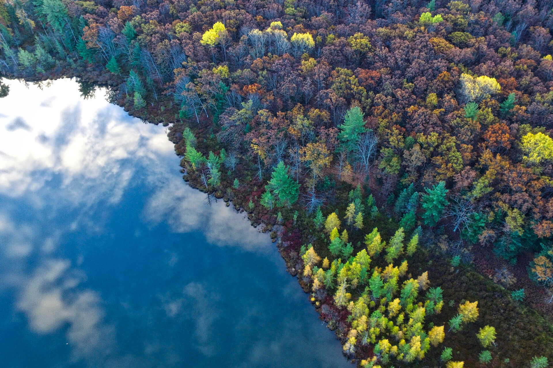 A river reflecting the sky and a forest with different types of tress